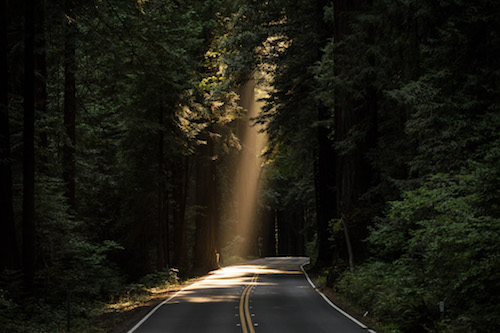 light peeks through a hole in the top of the trees onto the dark road