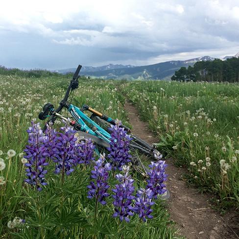 mtb in lavender field