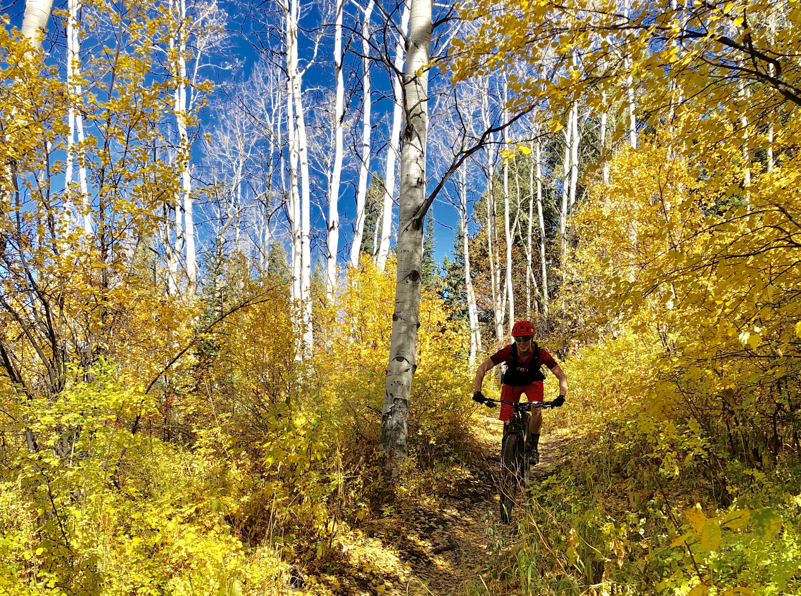 Sacred Cycle - Fall Aspens Lands 2019