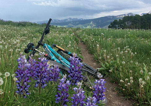 mtb in lavender field